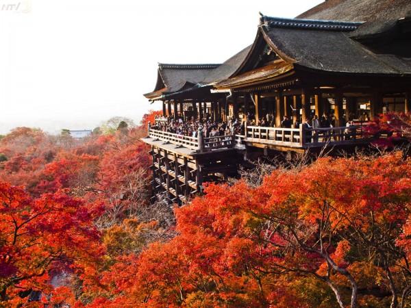 DU LỊCH NHẬT BẢN [NAGOYA – OSAKA – KYOTO- FUJI - TOKYO] LÃNG MẠN SẮC THU